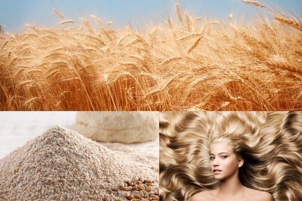 Harina de centeno para cabello