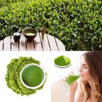 ¿Cómo adelgazar con té Matcha?